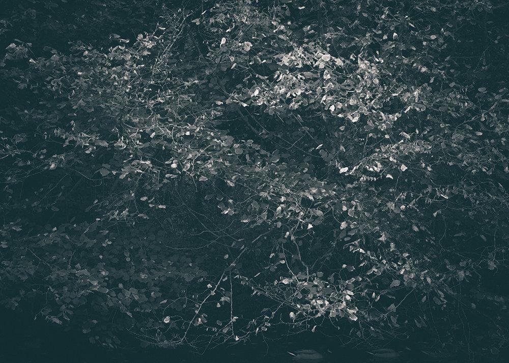 The Secret Language of Trees, week 2 October_20171013_0079_1BW toned.jpg