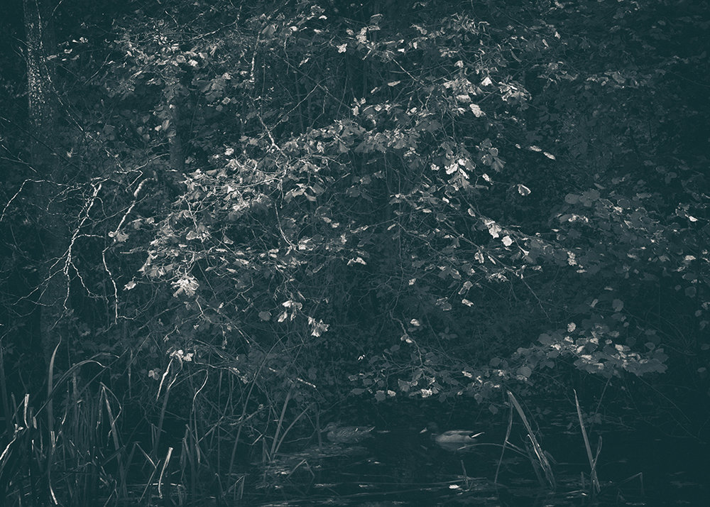 The Secret Language of Trees, week 2 October_20171013_0088_1BW toned.jpg