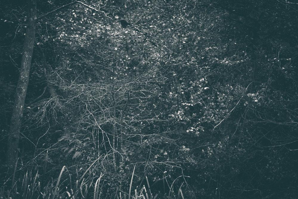 The Secret Language of Trees, week 2 October_20171013_0089_1.jpg