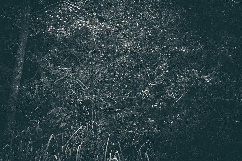 The Secret Language of Trees, week 2 October_20171013_0089_1BW toned.jpg