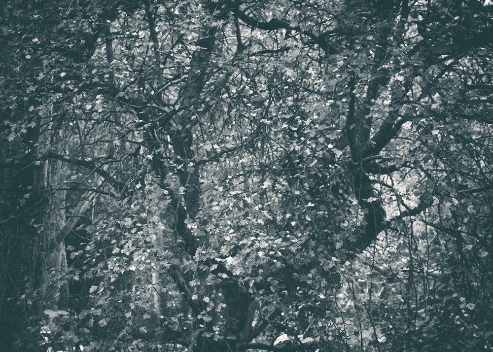 The Secret Language of Trees, week 2 October_20171013_0118_1.jpg