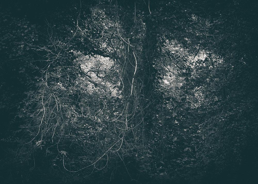 The Secret Language of Trees, week 2 October_20171013_0119_1BW toned.jpg
