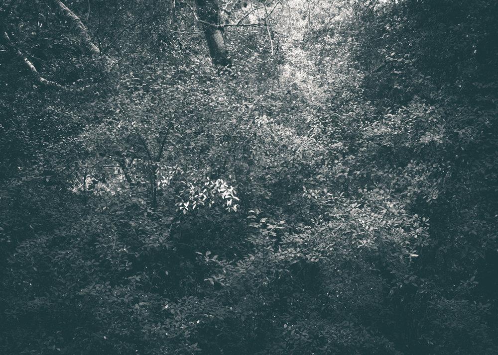The Secret Language of Trees, week 2 October_20171013_0120_1.jpg