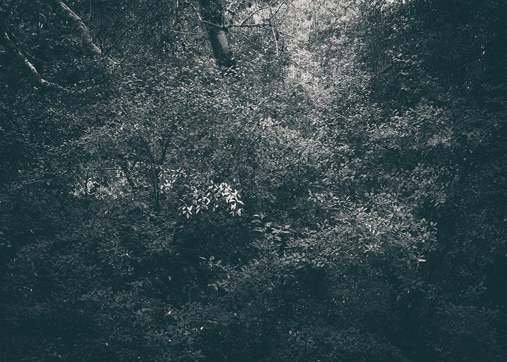 The Secret Language of Trees, week 2 October_20171013_0120_1BW toned.jpg