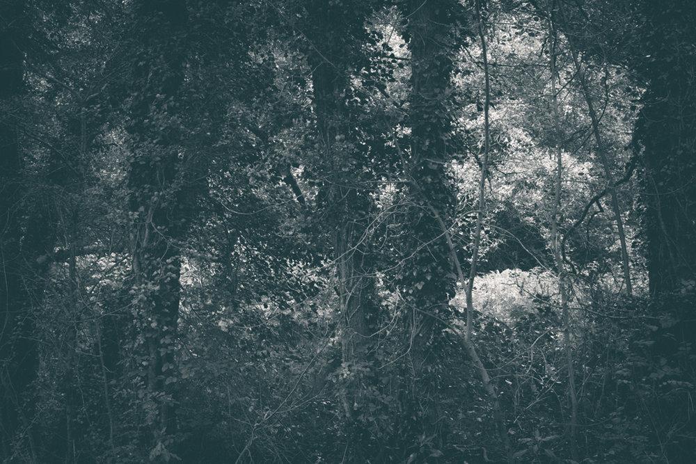 The Secret Language of Trees, week 2 October_20171013_0124_1.jpg