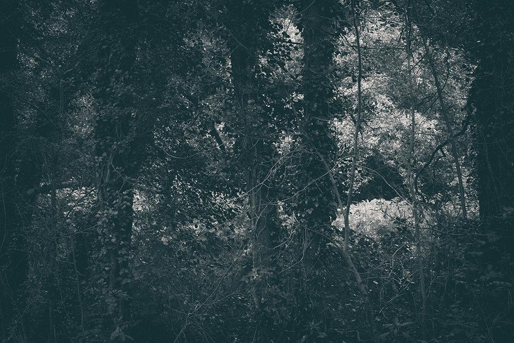 The Secret Language of Trees, week 2 October_20171013_0124_1BW toned.jpg