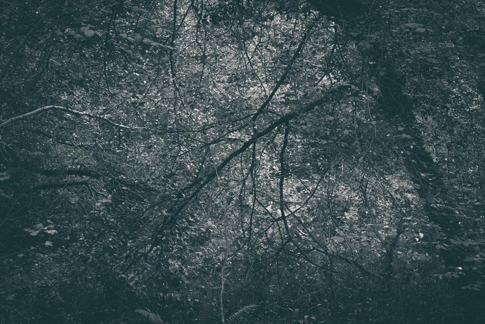 The Secret Language of Trees, week 2 October_20171013_0129_1.jpg