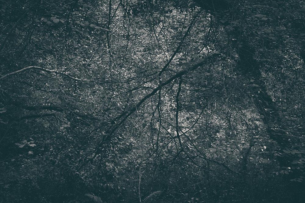 The Secret Language of Trees, week 2 October_20171013_0129_1BW toned.jpg