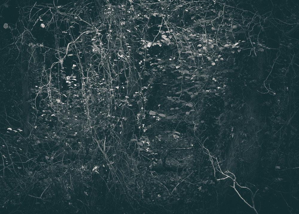 The Secret Language of Trees, week 2 October_20171013_0134_1.jpg
