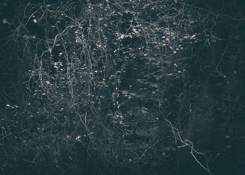 The Secret Language of Trees, week 2 October_20171013_0134_1BW toned.jpg
