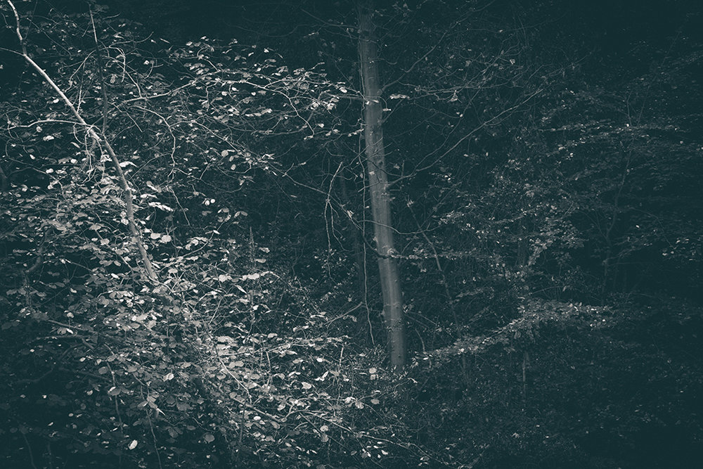 The Secret Language of Trees, week 2 October_20171013_0137_1BW toned.jpg
