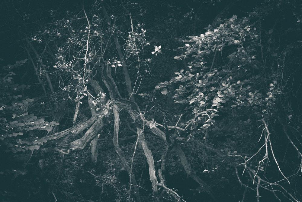 The Secret Language of Trees, week 2 October_20171013_0150_1_1.jpg