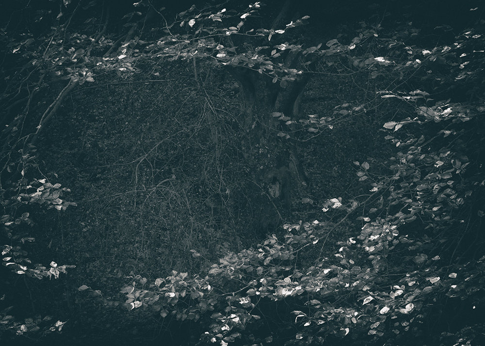 The Secret Language of Trees, week 2 October_20171013_0149_1_1BW toned.jpg