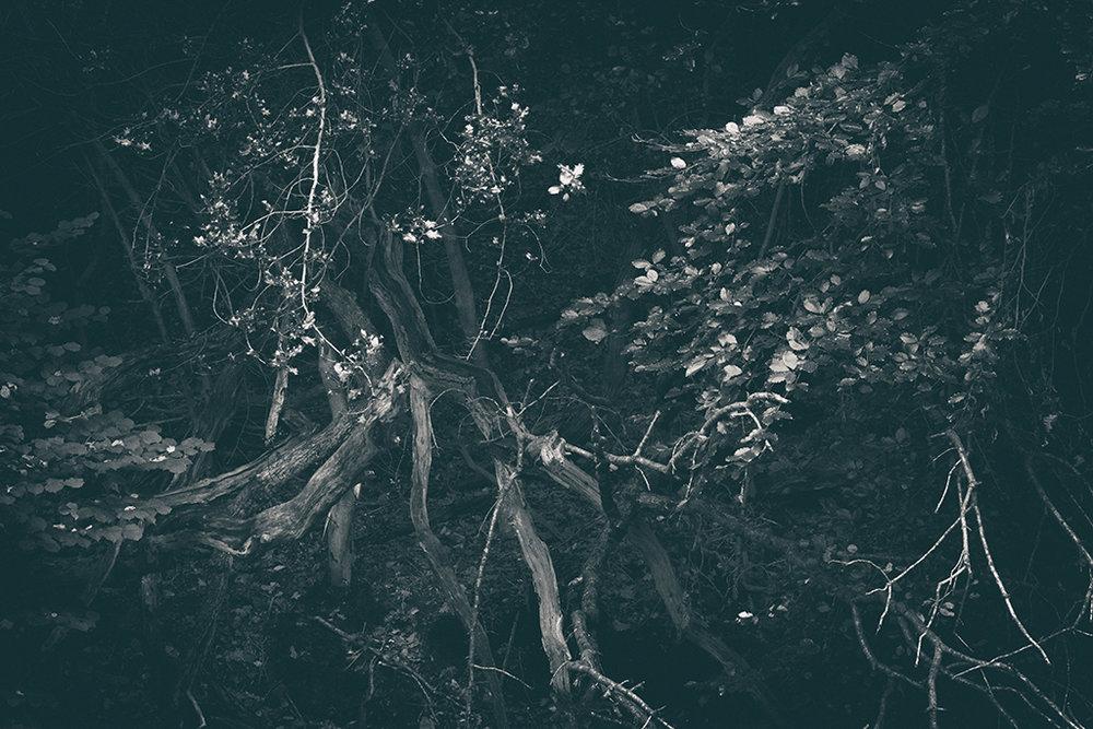 The Secret Language of Trees, week 2 October_20171013_0150_1_1BW toned.jpg