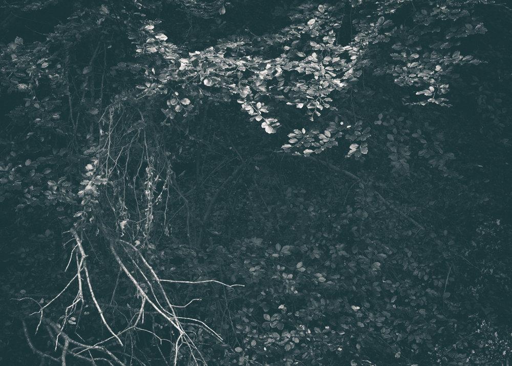 The Secret Language of Trees, week 2 October_20171013_0152_1.jpg
