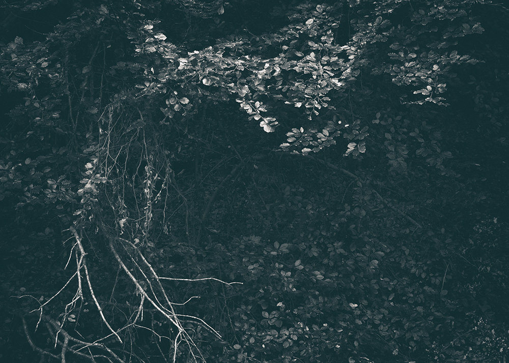 The Secret Language of Trees, week 2 October_20171013_0152_1BW toned.jpg