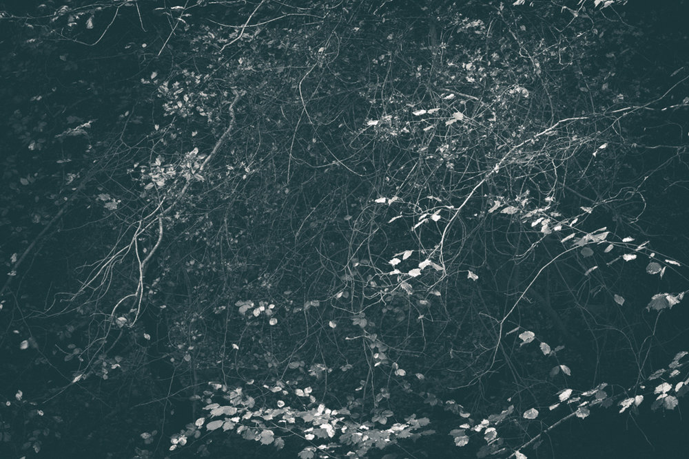 The Secret Language of Trees, week 2 October_20171013_0154_1.jpg