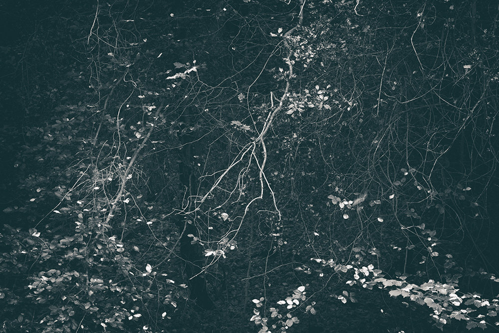 The Secret Language of Trees, week 2 October_20171013_0156_1BW toned.jpg