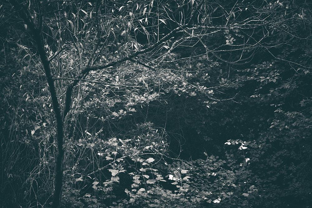 The Secret Language of Trees, week 2 October_20171013_0161_1BW toned.jpg