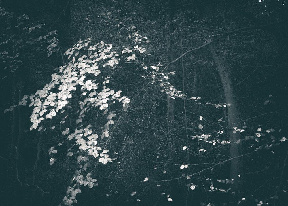 The Secret Language of Trees, week 2 October_20171013_0163_1.jpg