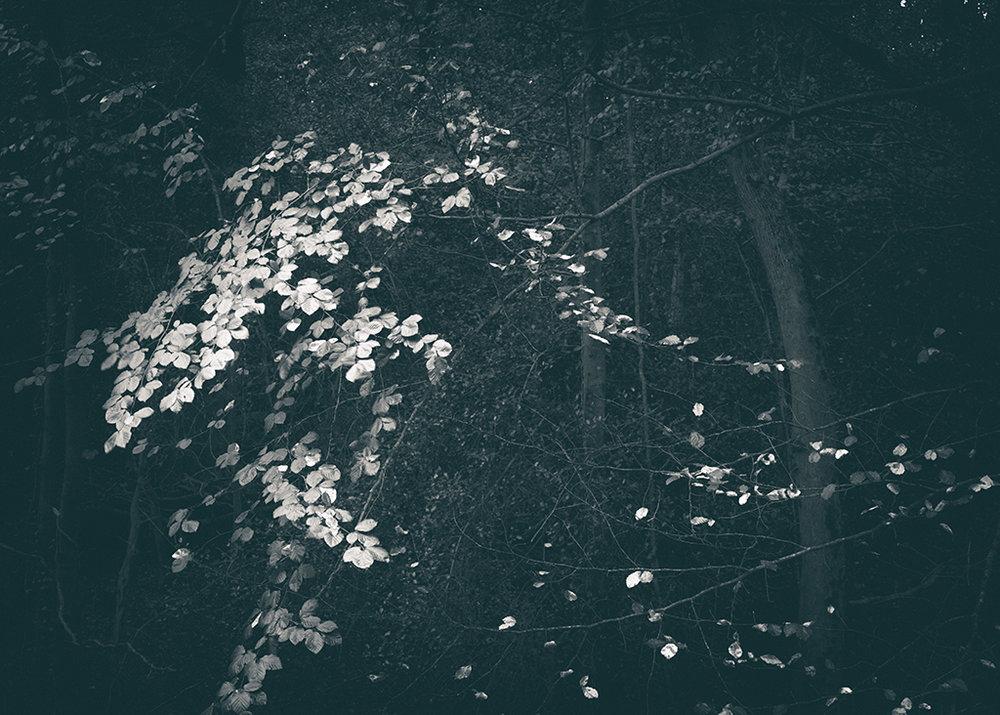 The Secret Language of Trees, week 2 October_20171013_0163_1BW toned.jpg