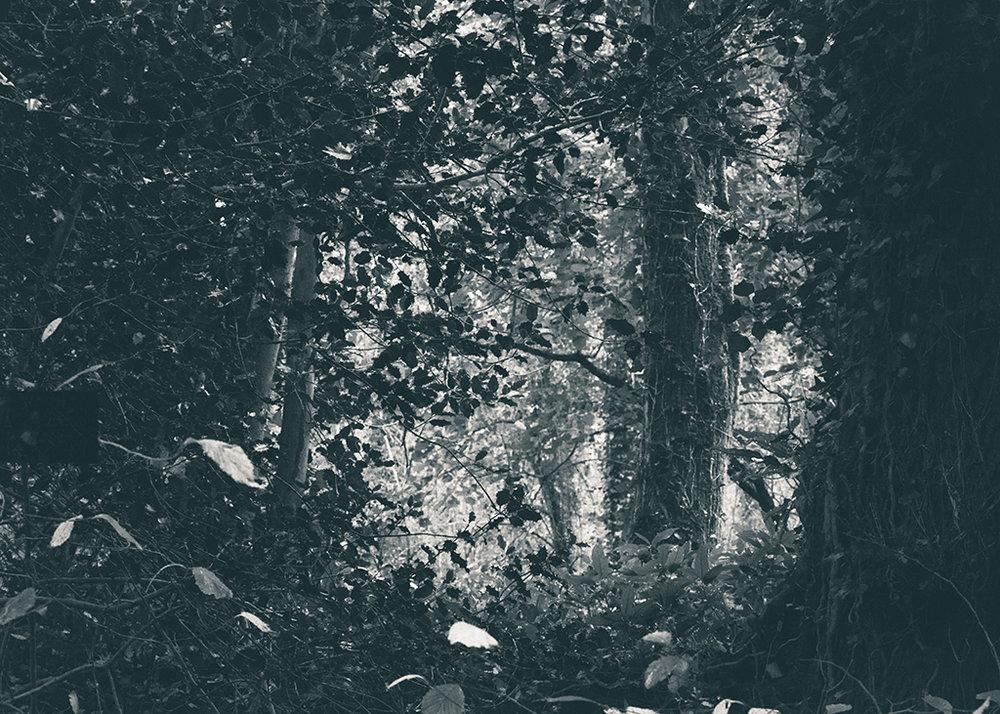 The Secret Language of Trees, week 2 October_20171013_0183_1BW toned.jpg