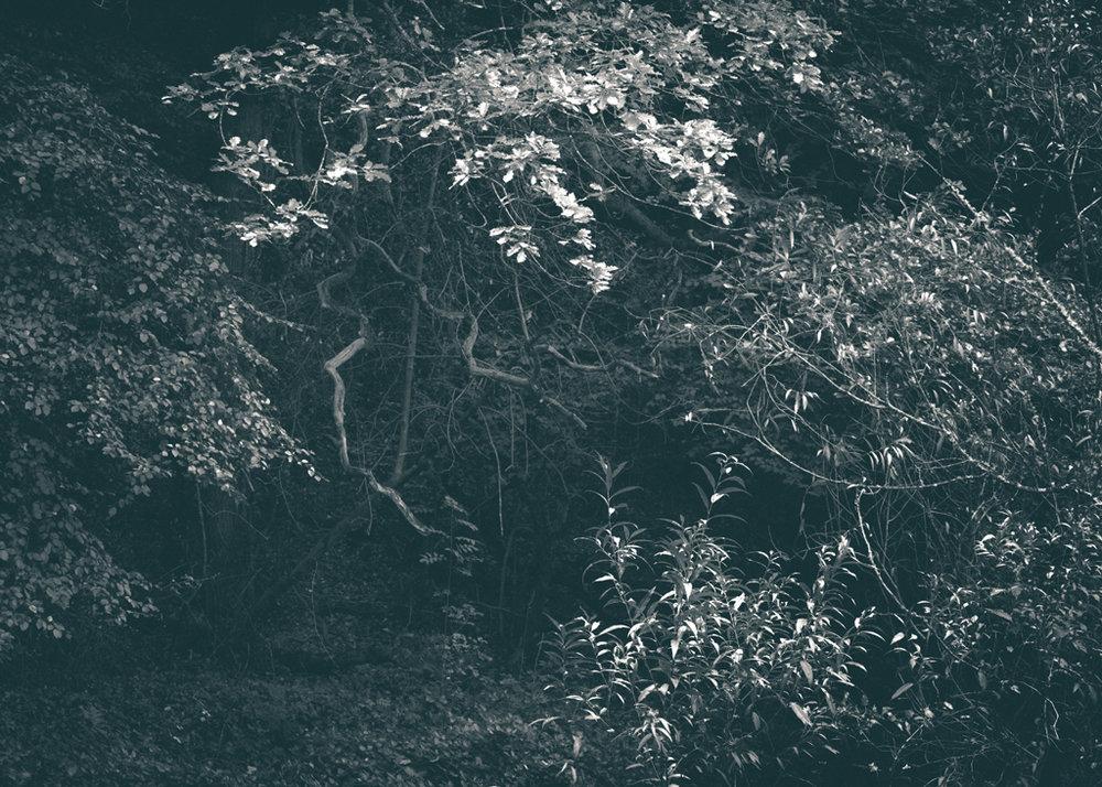 The Secret Language of Trees, week 2 October_20171013_0186_1.jpg
