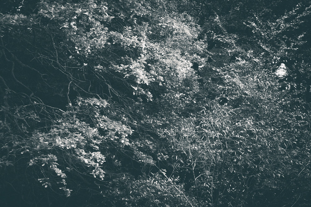 The Secret Language of Trees, week 2 October_20171013_0188_1.jpg