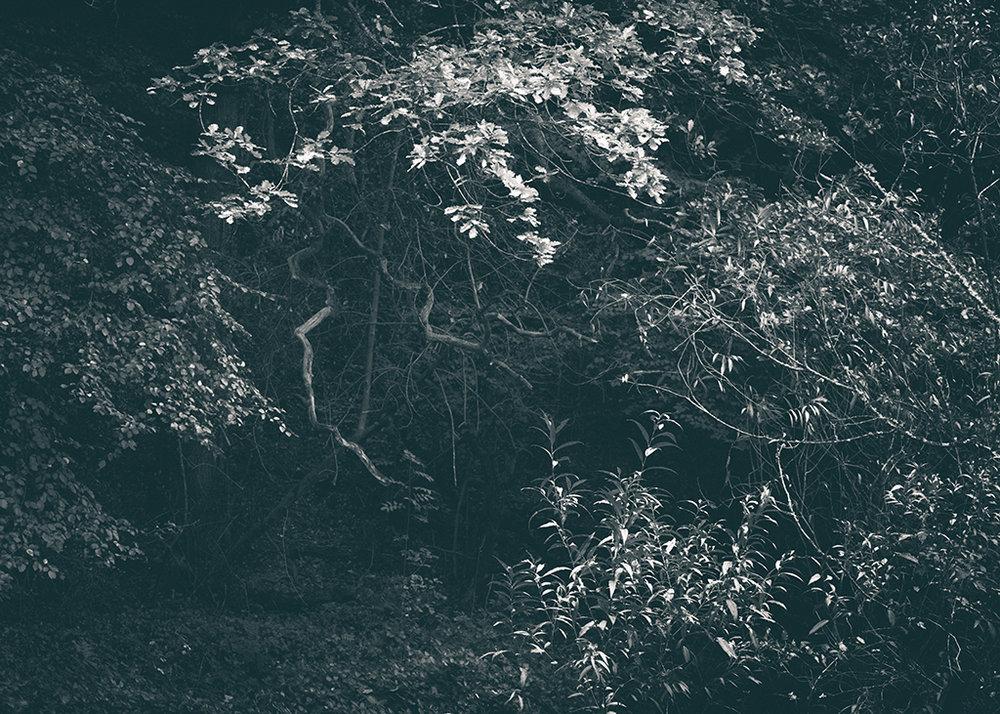 The Secret Language of Trees, week 2 October_20171013_0186_1BW toned.jpg