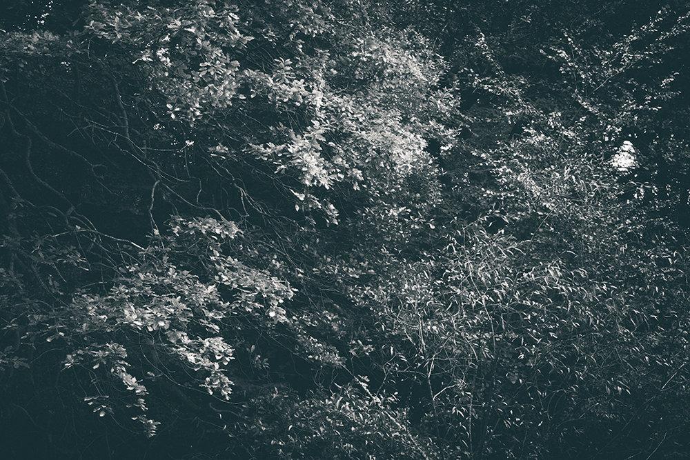The Secret Language of Trees, week 2 October_20171013_0188_1BW toned.jpg