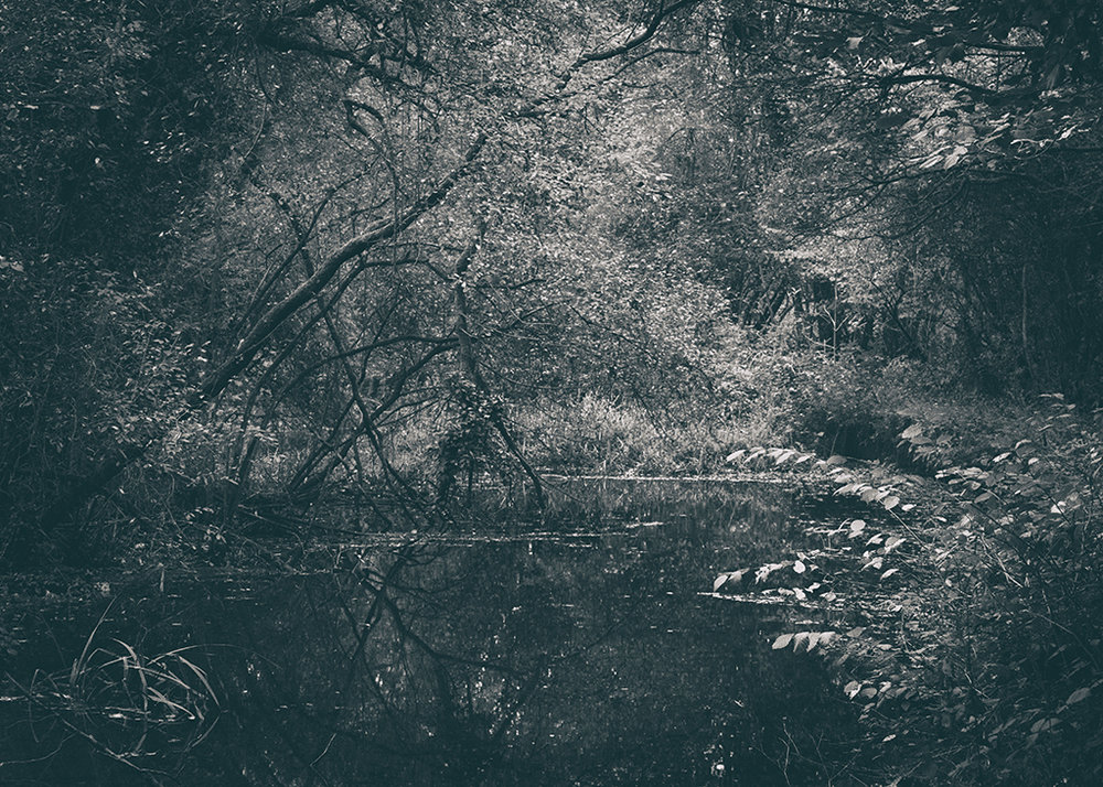 The Secret Language of Trees, week 2 October_20171013_0190BW toned.jpg