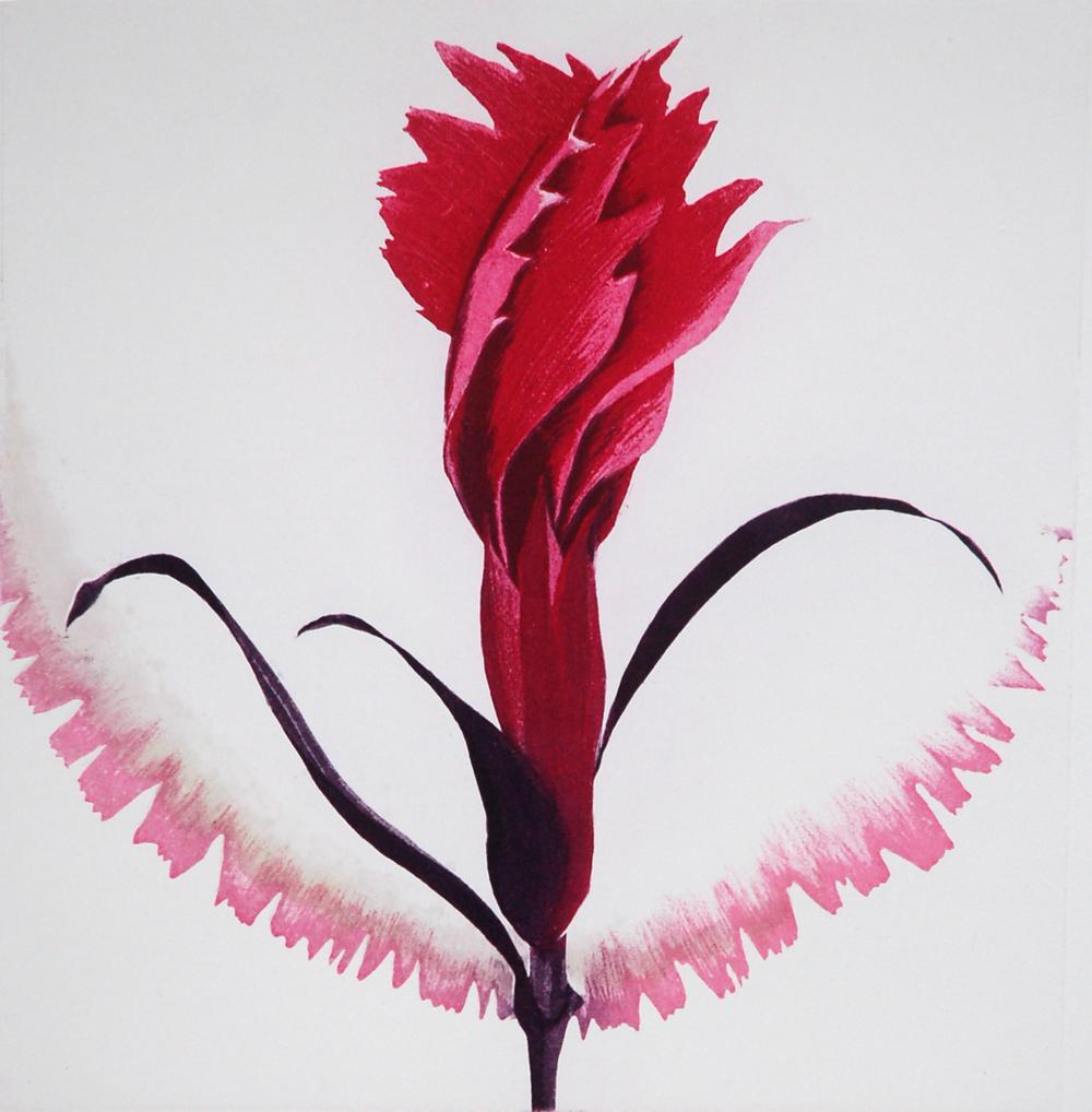 Dianthus V