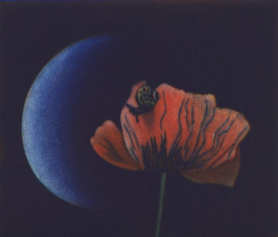 Tulip & Crescent Moon