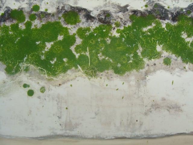 Lichen (green) ii