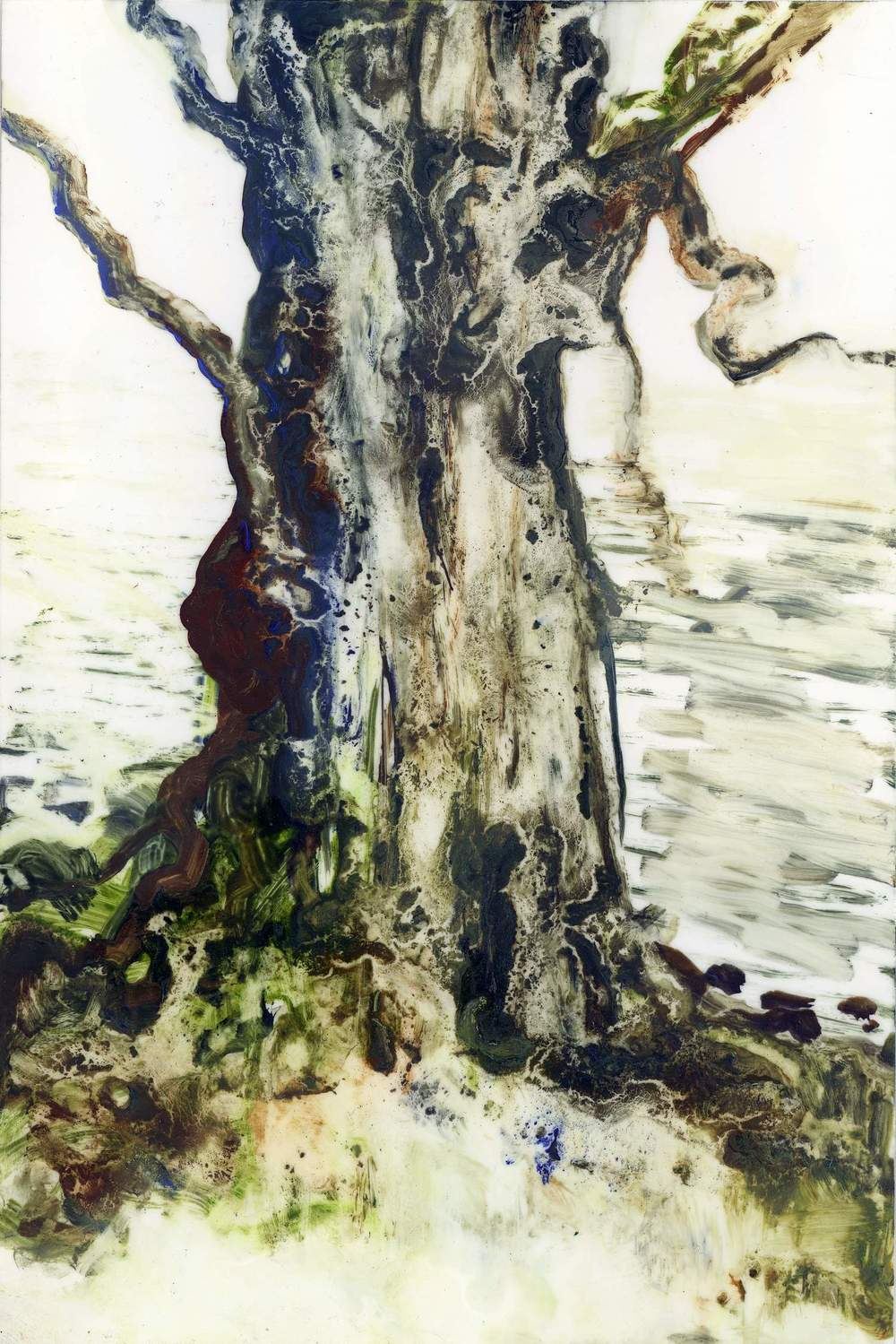 Conor Galalgher Artist. Tree Study I