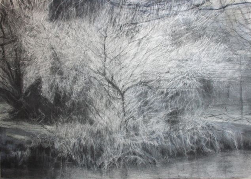 Riverbank tree - frost