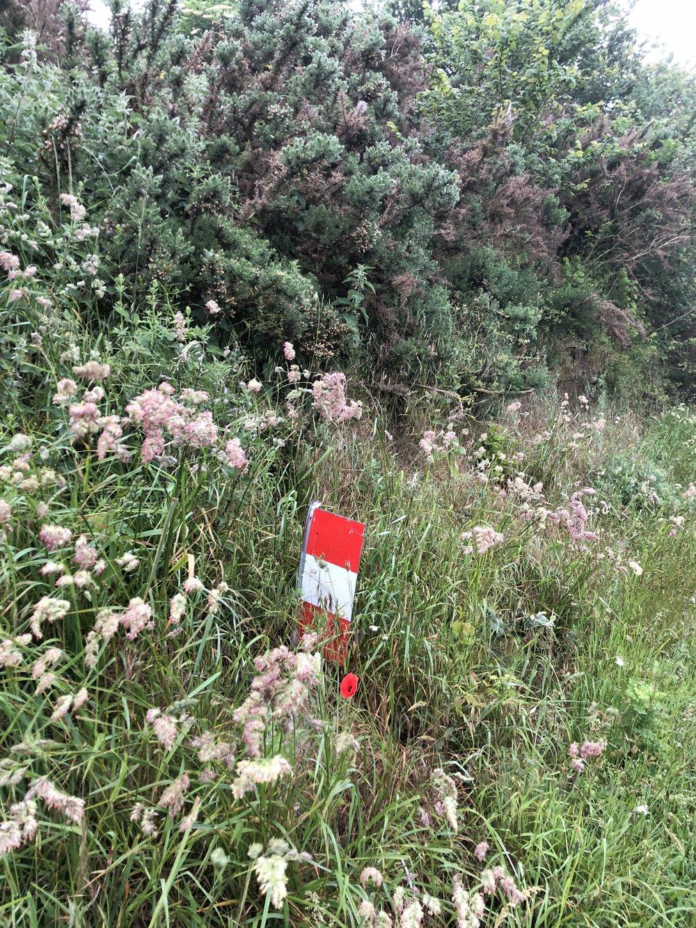 A Via Francigena trail marker