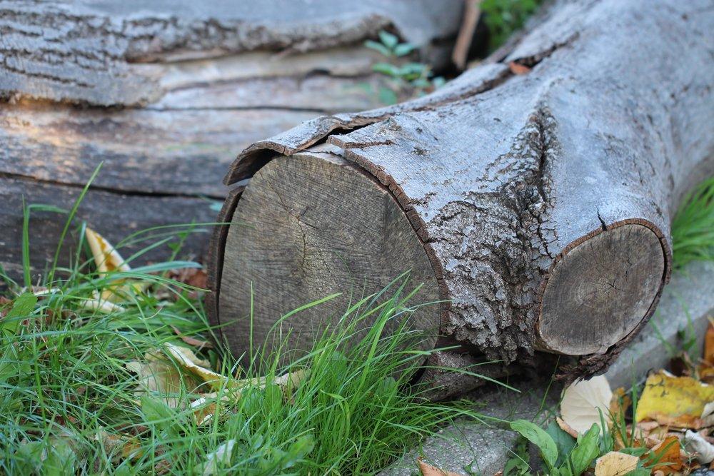 wood-987592_1920.jpg
