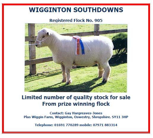 Wiggington.jpg