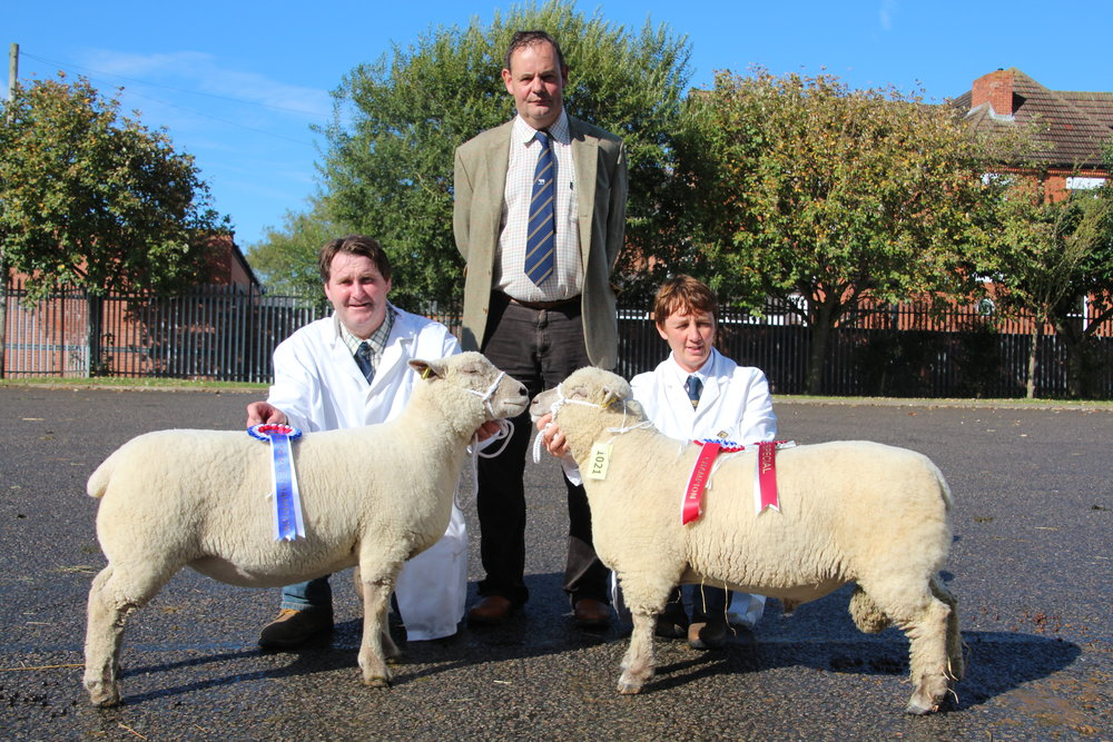 Champion and Reserve Champions at 2017 Melton Mowbray Show & sale