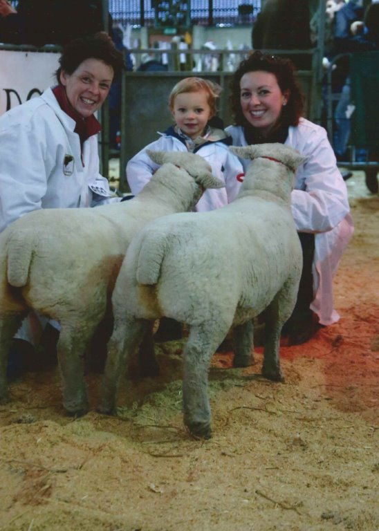 Royal Welsh Winter Fair 2017 - winning pair from Wakeham-Dawson & Harmer.jpg