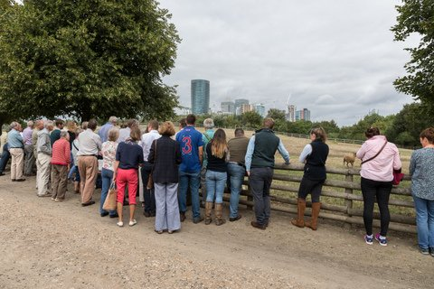 Stopping by the sheep paddock of the farm tour, with the skyscrapers of Canary Wharf as a backdrop