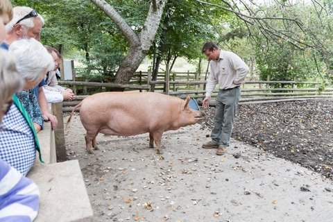 Mudchute City Farm is home to many different species, such as the Tamworth pigs