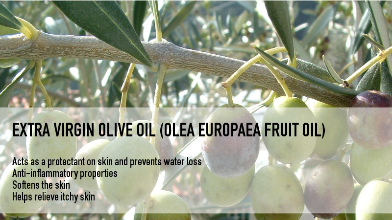ingredients_oliveoil_800x450.jpg