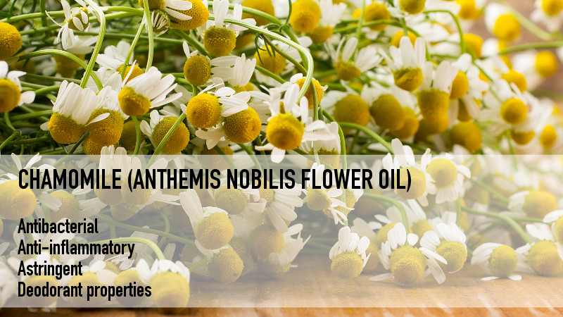 ingredients_chamomile_800x450.jpg