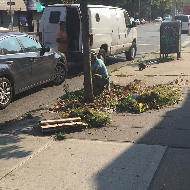 A weed-free Avenue P and Kings Highway! Thanks to @BrandonLandscaping for partnering up with us for the spraying/removing of tree pit/sidewalk unsightly weeds in our neighborhood. #keepbrooklynbeautiful #clean