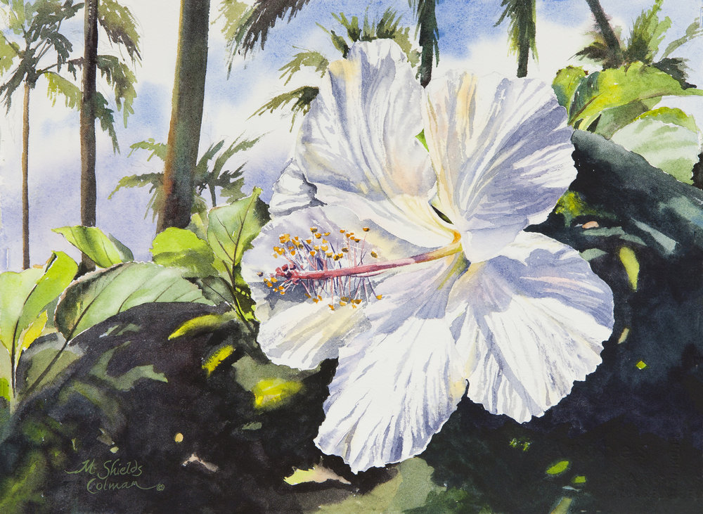 Princeville Hibiscus