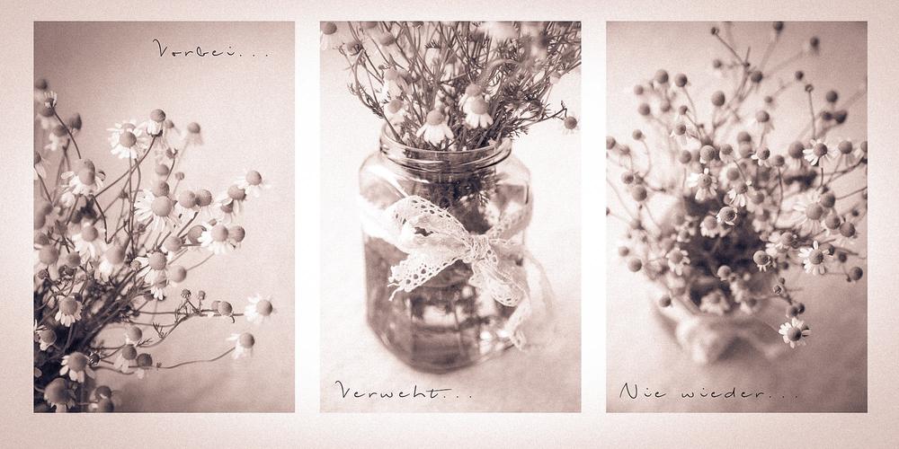 Foto by Clara Schindler-Strauss