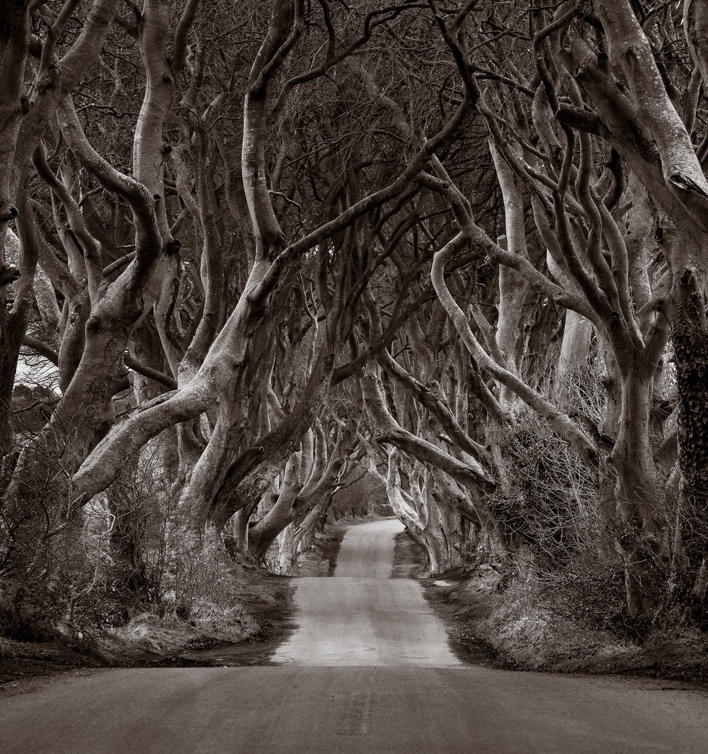 """The Dark Hedges"" Foto: Eric Berger - LIK Fotoevent 2018"