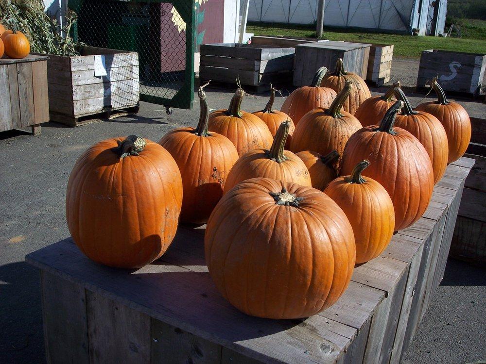 20b Pumpkins at roadside stand.jpg